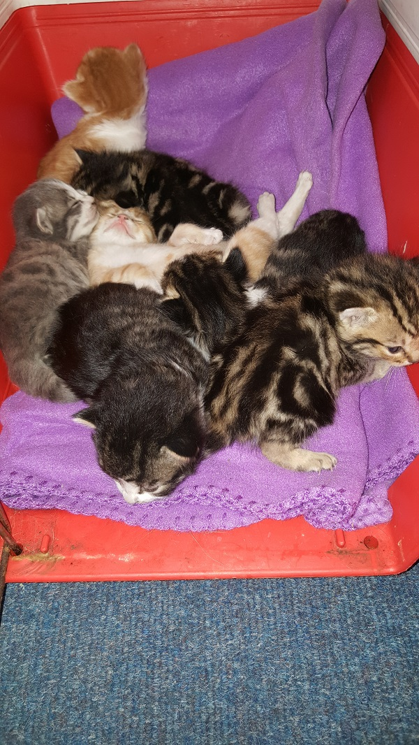 litter of young kittens
