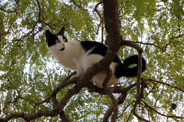 black & white cat in a tree